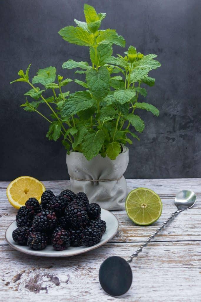 Fresh mint plant, blakberries, lemon, lime and a muddling spoon