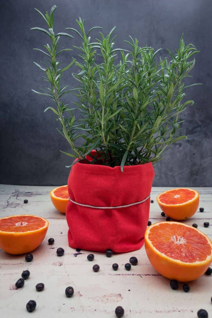 A fresh rosemary plant with blood oranges and juniper berries